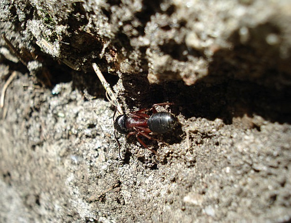 Ant Landscapes Nature Nature Countryside Wood Ant