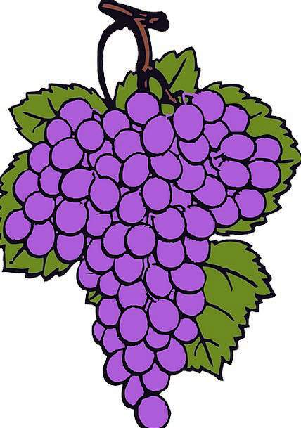 Grape Group Cluster Bunch Grapes Ripe Vineyard Rea