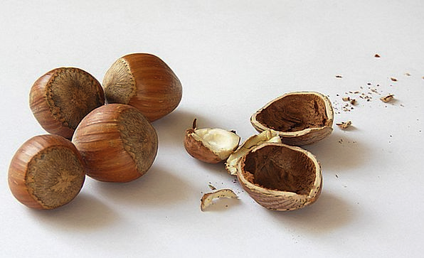 Nuts Mad Drink Food Shell Bomb Hazelnuts Nuclear A