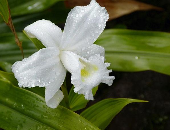 Orchid Landscapes Hot Nature Tropics Tropical Flor