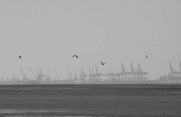 Gulls Landscapes Nature Port Harbor Bremerhaven Sk