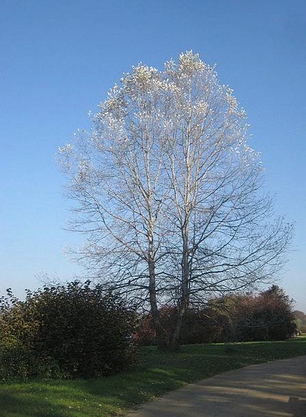 Tree Sapling Fall Babelsberg Autumn