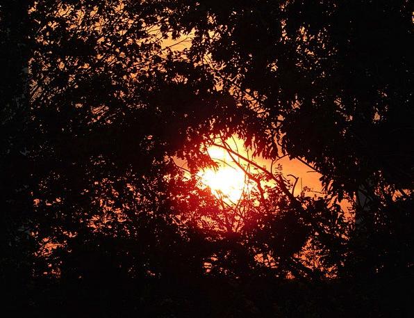 Sun Vacation Sundown Travel Trees Plants Sunset Ro