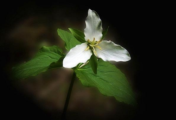 Anemone Landscapes Weed Nature Flower Floret Wildf