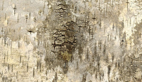 Bark Bay Textures Grime Backgrounds Texture Feel G