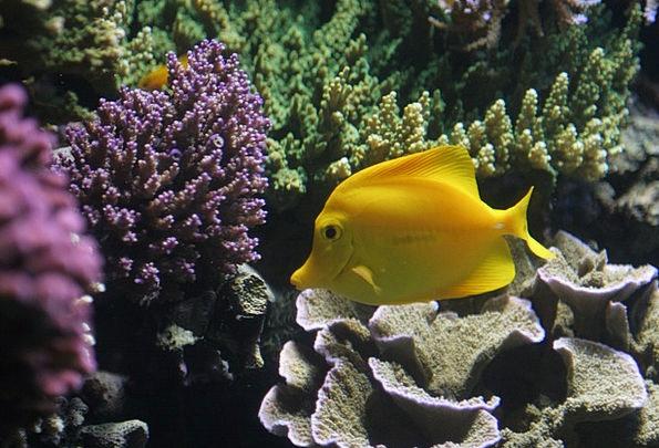 Fish Angle Vacation Hot Travel Yellow Creamy Tropi