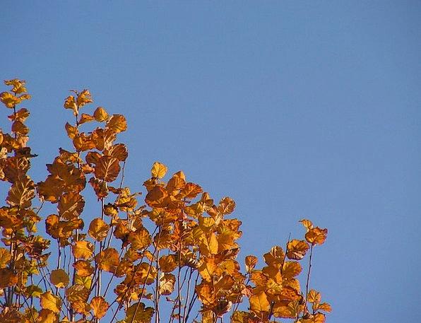 Leaves Greeneries Fall Foliage Greenery Autumn Col