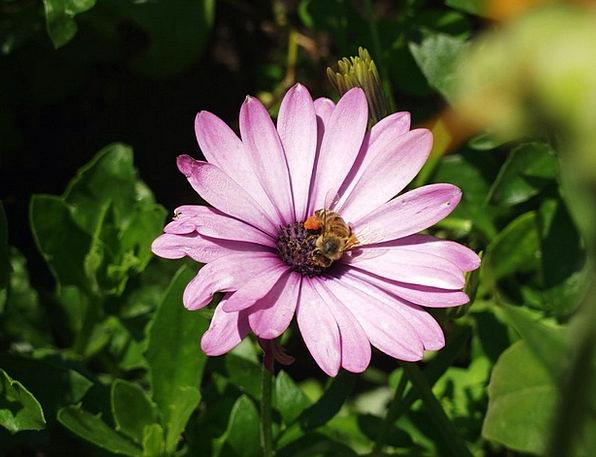 Flower Floret Landscapes Elaborate Nature Bee Purp