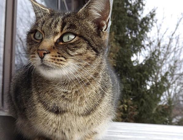 Kitten Feline Animal Physical Cat Cute Attractive
