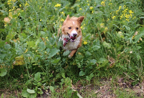 Dog Canine Animals Faunae Pumba