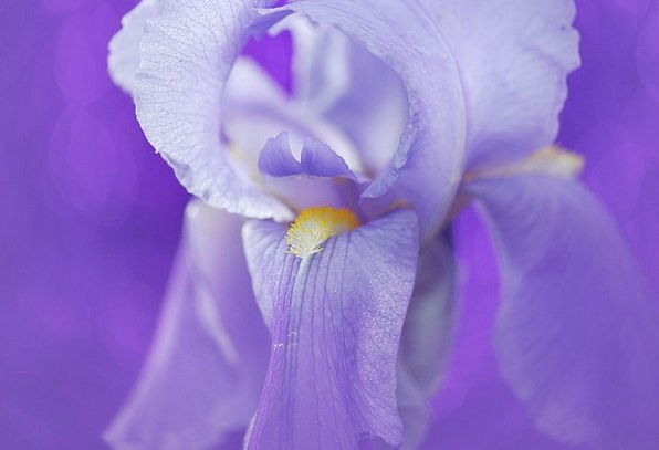 Iris Landscapes Floret Nature Blue Azure Flower Vi
