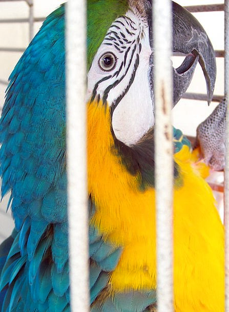 Parrot Imitator Fowl Animal Physical Bird Captive