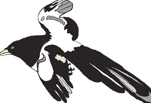 Bird Fowl Dark White Snowy Black Spread Feast Free