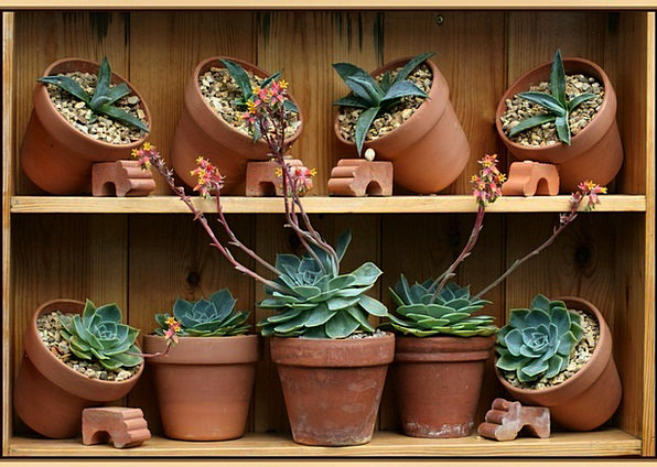 Flowerpots Planters Plot Agave Garden Succulent Ju