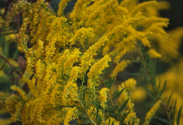 Wildflowers Landscapes Creamy Nature Weeds Yellow