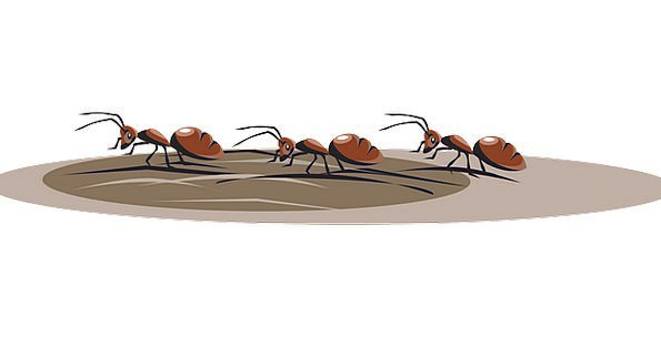 Ants Vacation Travel Walking Three Insects Bugs Fr