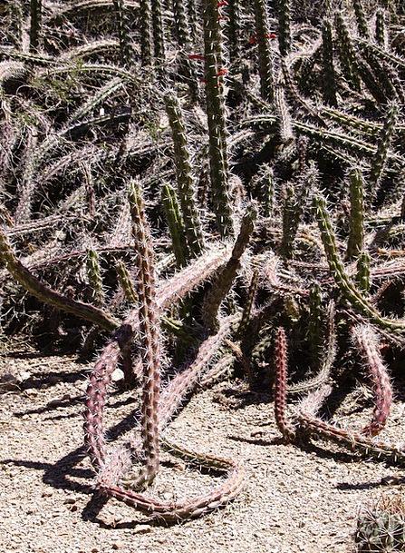 Cactus Reward Arizona Desert Usa Dry Hot Thirsty