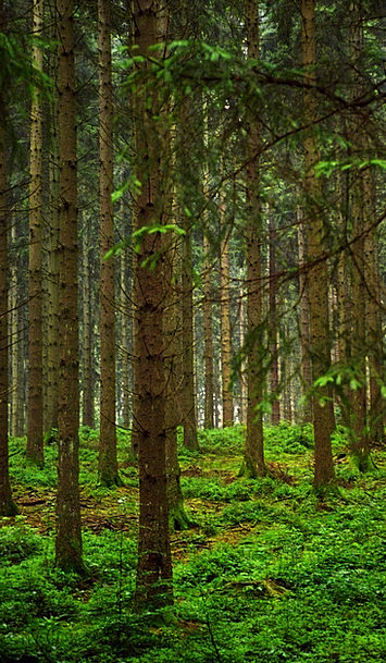 Trees Plants Landscapes Nature Slovenia Bosco Natu