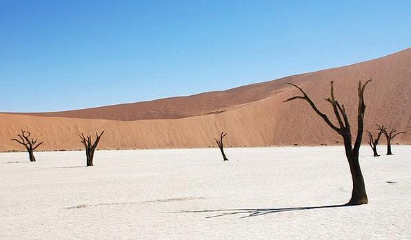 Dune Bank Reward Dead Tree Desert Sand Shingle Rid