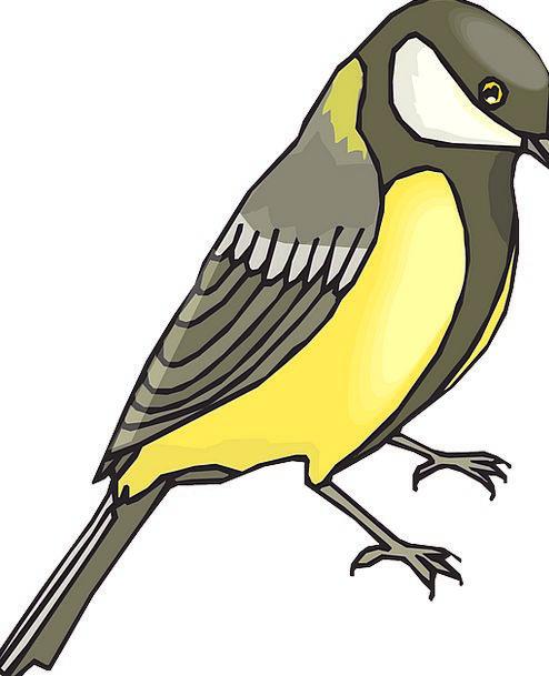Goldfinch Fowl Wildlife Nature Bird Ground Golden
