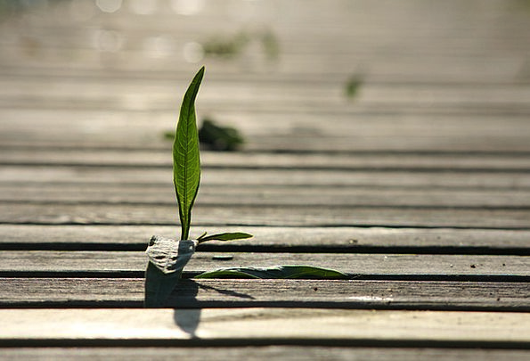 Seedling Sprout Landscapes Straw Nature Pier Dock