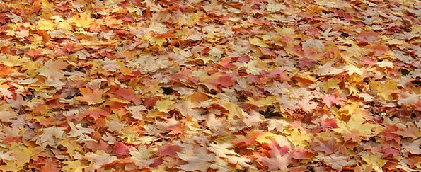 Leaves Greeneries Landscapes Nature Fall Reduction