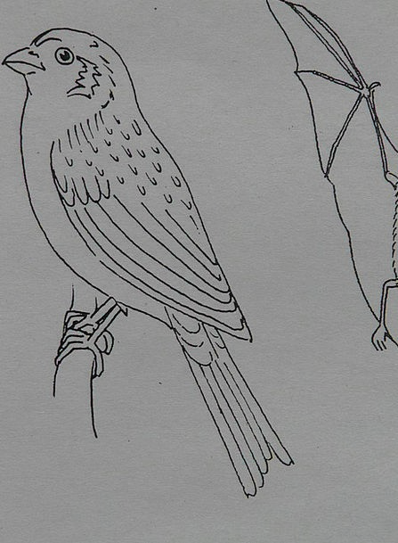Bird Fowl Animal Physical Sparrow Coloring Pages I