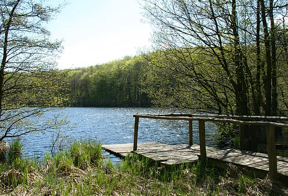 Web Mesh Understand Green Lake See Rügen Baltic Se