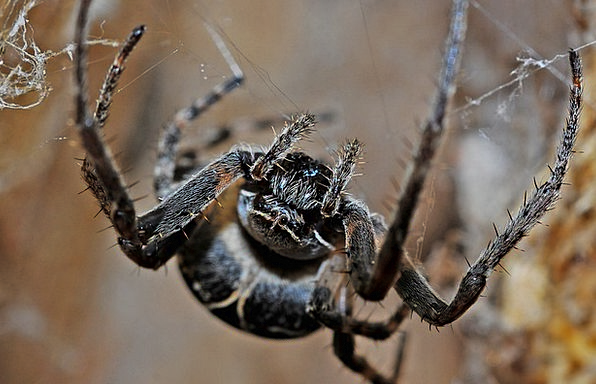 Spider Macro Instruction Arachnid Environment Inse