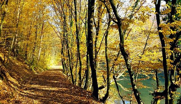 Autumn Fall Landscapes Greenery Nature Yellow Crea