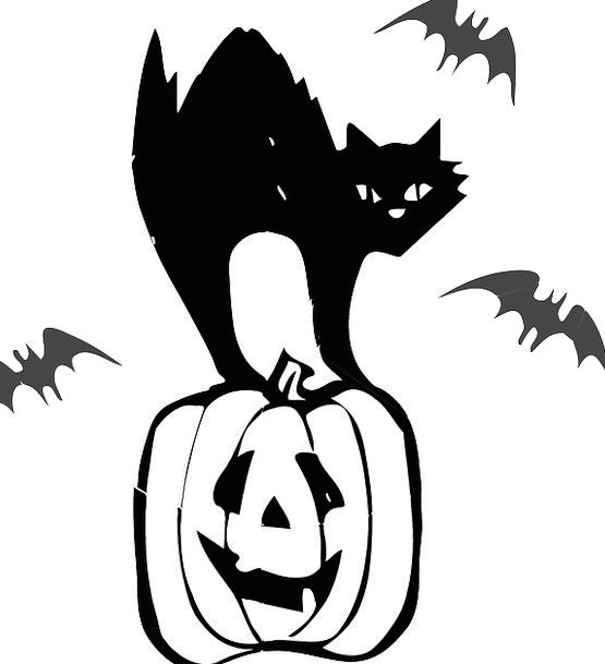 Jack O Lantern Pumpkin Black Cat Bat Halloween Pet