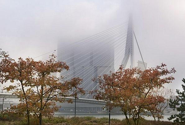 Rotterdam Mist Erasmus Bridge Fog Bridge Bond