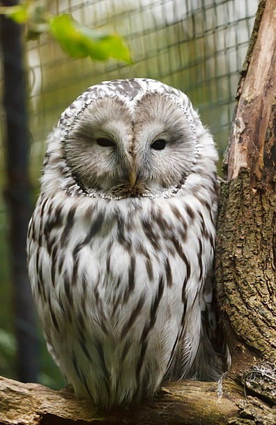 Animal Physical Bill Bird Fowl Beak Owl Branch Div