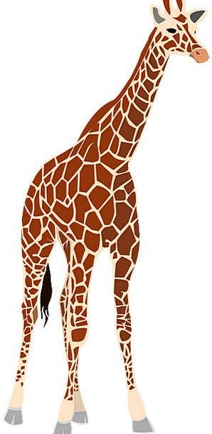 Giraffe Creature Animal Physical Mammal Savannah H