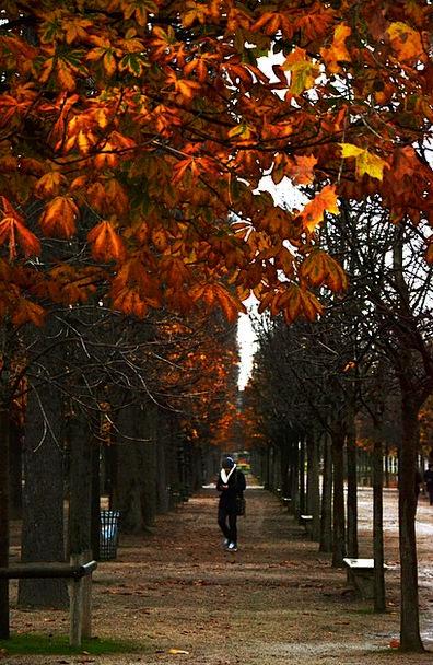 Park Common Landscapes Woodland Nature Tree Saplin