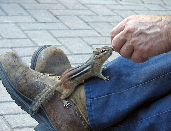 Chipmunk Squirrel Collector Chippy Rabbit Bunny An