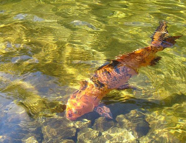 Fish Angle Landscapes Nature Water Aquatic Transpa