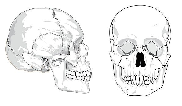 skull mind medical drawing health bones frames dia