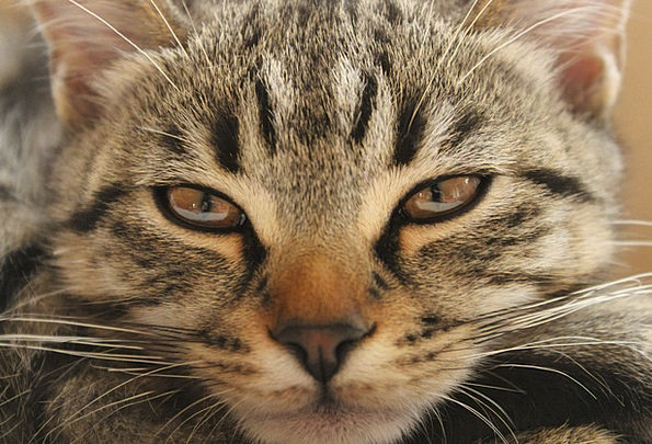 Cat Feline Aftermath Boredom Tedium Hangover Radwa