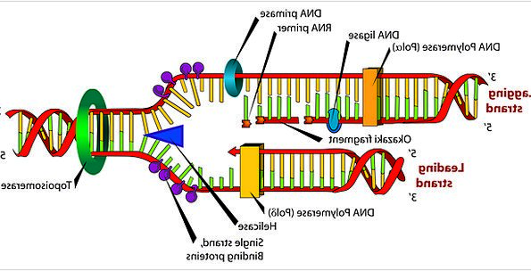 Diagram Drawing Biology Ecology Dna Labeled Branded