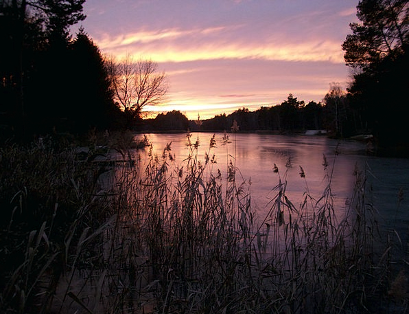 Lake In Winter Dawn Ice Cover Sunrise Reed Cane Re