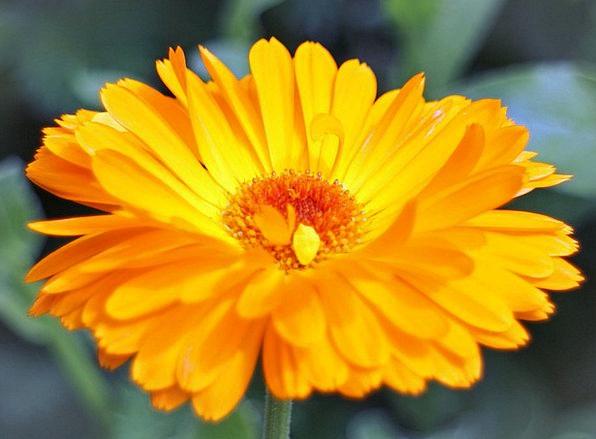 Flower Floret Landscapes Nature Gardening Horticul