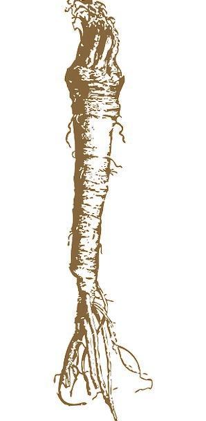 Horseradish Drink Food Root Origin Radish Food Nou