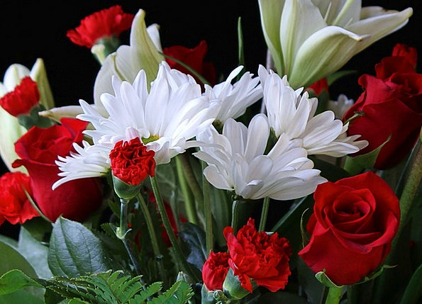 White Daisys Landscapes Nature Red Roses Red Carna
