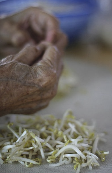 Bean Shoots Pointers Malaysia Hands