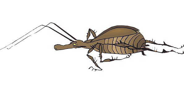 Antenna Feeler Germ Wings Annexes Bug Insect Fast