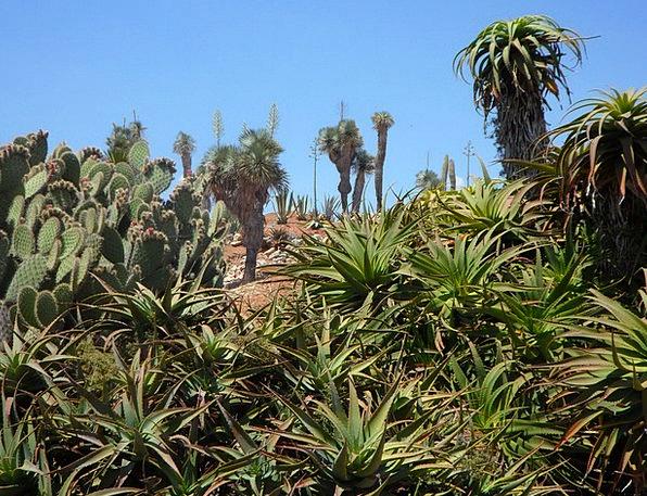 Garden Plot Landscapes Nature Flora Vegetation Bot