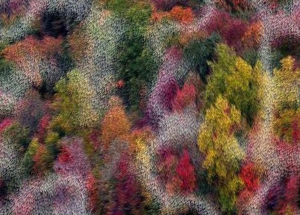 Background Contextual Textures Plants Backgrounds