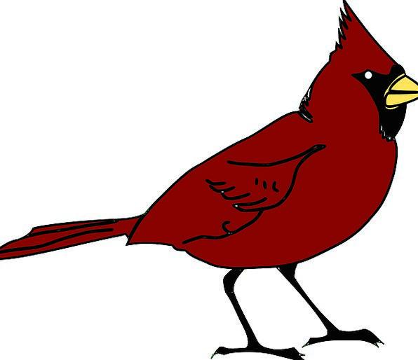 Cardinal Basic Fowl Beak Bill Bird Species Class S