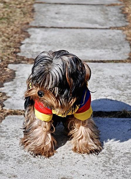Dog Canine Brat Pavement Roadway Puppy Sitting Sed